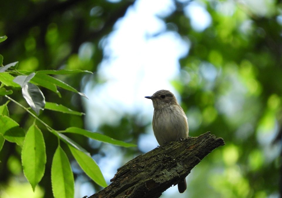 Canadian Forestry's Role in Bird Conservation