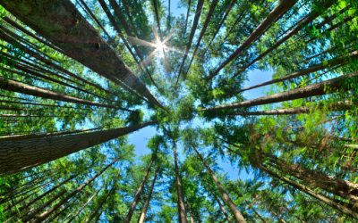 Canada's Living Forests: Myths, Maple and You