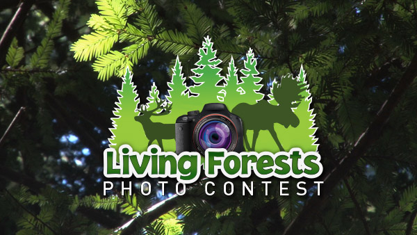 Earth Rangers and FPAC are proud to announce the winners of the Living Forests Photo Contest