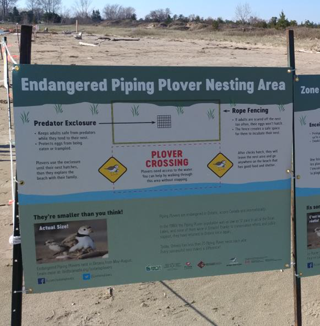 Putting up signs around plover nests helps make sure everyone knows how important it is to protect them.