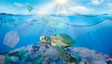Lend a Helping Flipper on World Sea Turtle Day!