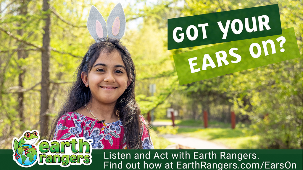 New Earth Rangers Research on Eco-Anxiety